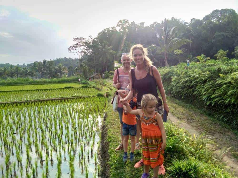 Rice field walk
